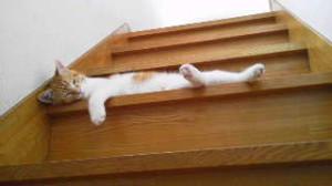 階段みかん